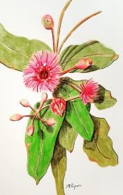 'Gum Blossum' 2018 - Watercolour Pencils & Ink on Paper 21 x 15cm Theme 'native'