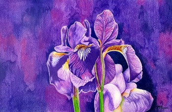 'Irises' 2018 - Watercolour & Coloured Pencils on Paper 21 x 29.7cm SOLD